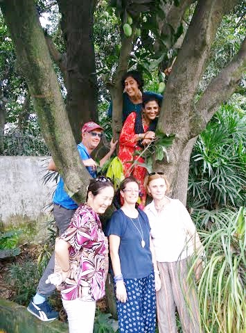 Group Mango tree- 1