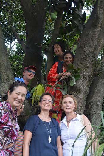 MANGO TREE CLIMB