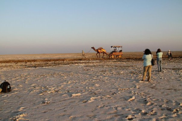 salt-desert-camel