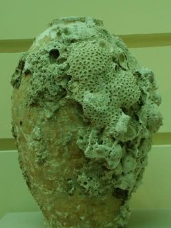 corals on an urn